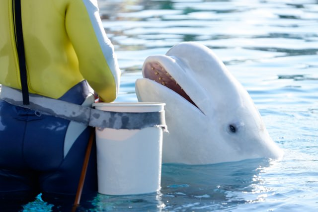 3. 與海洋動物近距離接觸!『海洋親密館』