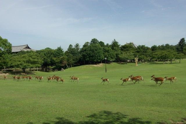 奈良公園是個怎麼樣的地方?