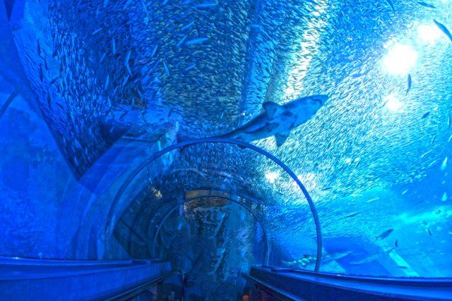 1. 日本國內最大的水族館!『海族之館』