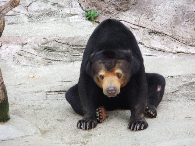7. 喜歡動物的朋友一定要去!「天王寺動物園」
