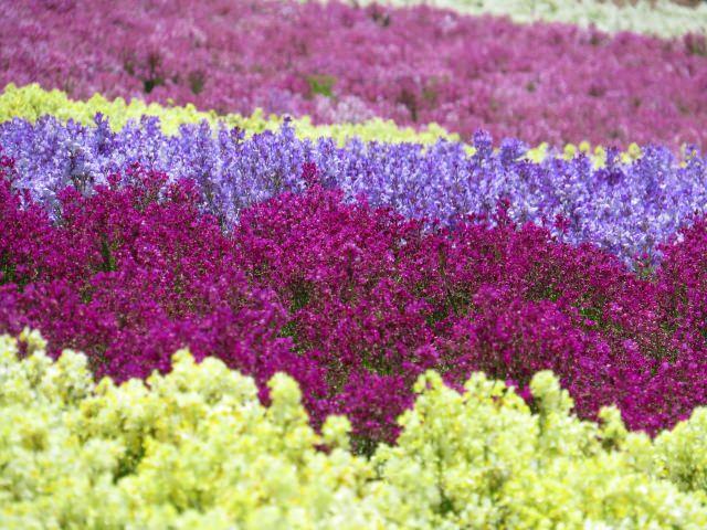 9. 四季都能被各種花卉所療癒的景點!「久住花公園」