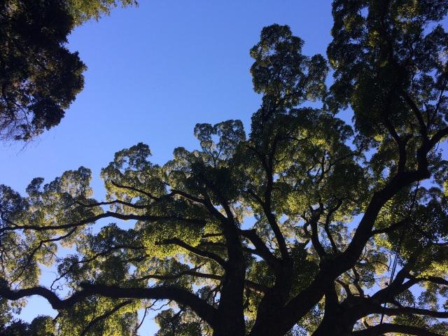 7. 繞著大樟樹的周邊散步的話願望就會實現「來宮神社」