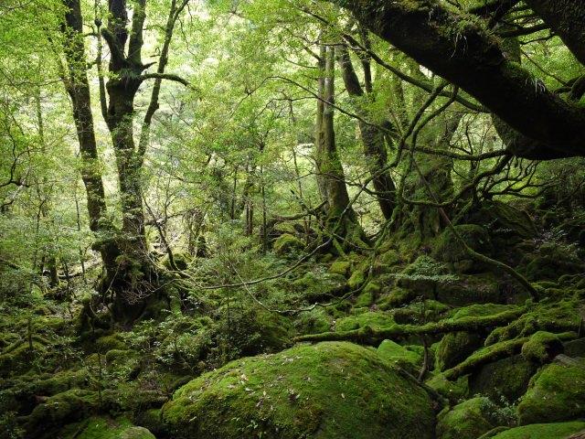 1. 能盡情享受大自然的世界遺產「屋久島」