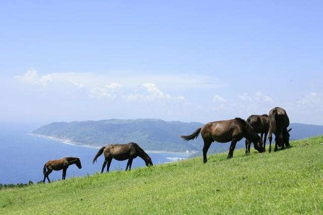 3. 可以近距離接觸野生馬匹的宮崎觀光地!「都井岬」
