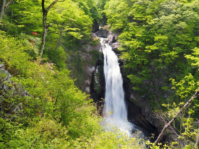 5. 欣賞壯麗的瀑布美景!仙台的人氣觀光地!「秋保大瀑布」