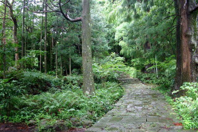 7. 能盡情感受美麗大自然的觀光景點「熊野古道 伊勢路」