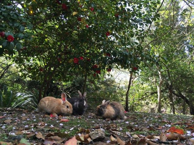 10. 兔子的樂園!廣島現在最炙手可熱的觀光景點!「大久野島」