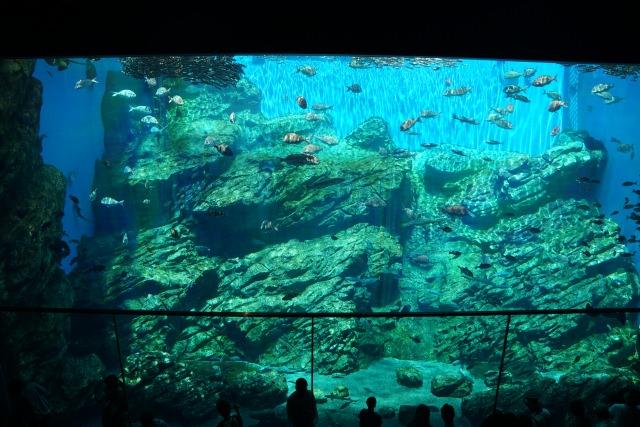 3. 被可愛的海洋生物所治癒。宮城的觀光景點「仙台海之杜水族館」