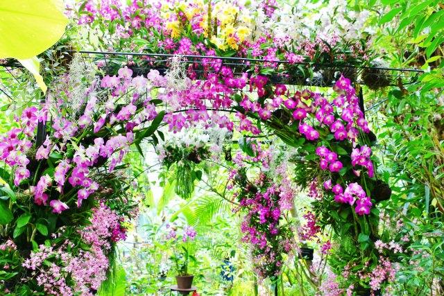 8. 可以觀察到各式各樣的植物洋溢著自然景色的觀光景點「牡野植物園」!