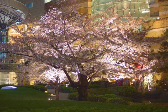 10. 在東京名所所能欣賞到的夜景「毛利庭園」
