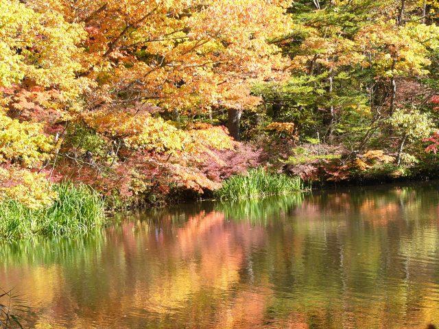 1. 輕井澤的美麗觀光景點「雲場池」