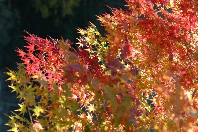 1. 從上空享受大自然美景。來青森看紅葉「八甲田山」