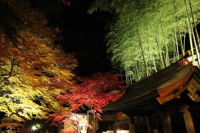 5. 在仙台的歷史景點欣賞紅葉!「瑞鳳殿」