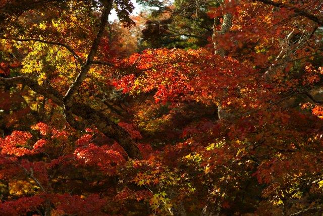 1. 世界遺產!宮島上的賞楓景點「紅葉谷公園」