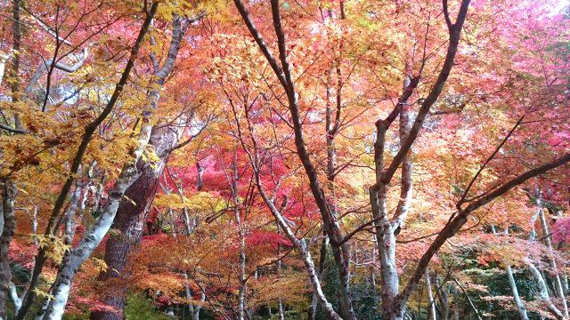 9. 神戶的歷史觀光景點。格外不同的楓葉景色!「瑞寶寺公園」