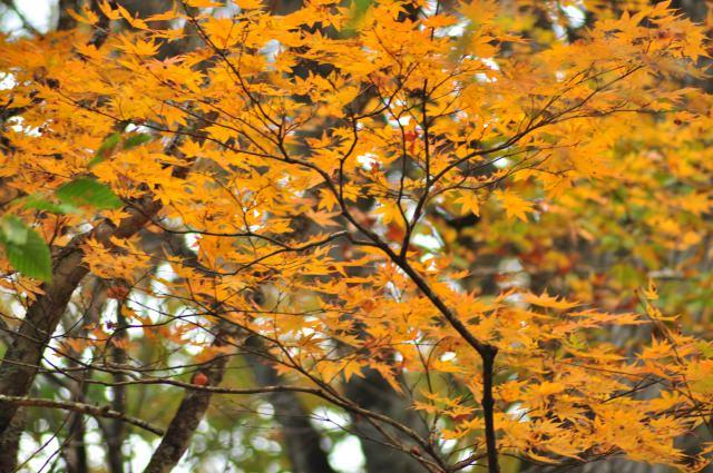 2. 在日本北邊欣賞沿著溪流的紅葉景色「奧入瀨溪流」