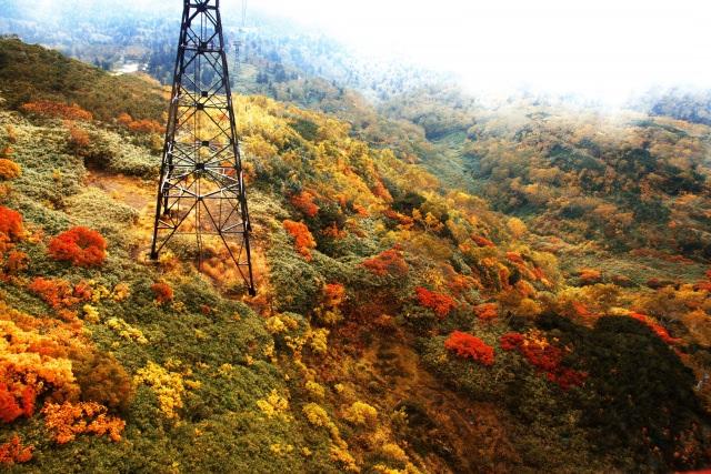 1. 在日本能欣賞到最早賞楓的景點「大雪山」