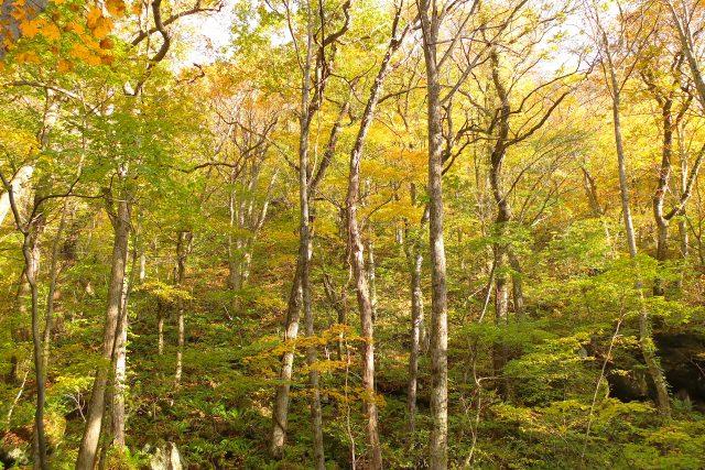6. 能輕輕鬆鬆觀賞大自然賞楓的青森景點「奧入瀨溪流」