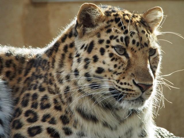 10. 讓人想不到是市立動物園的豐富內容「神戶市立王子動物園」
