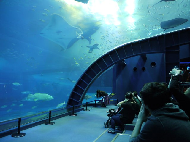 10. 日本最大規模水族館!基本中的基本「沖繩美海水族館」