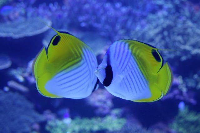 8. 位於溫泉縣‧大分的水族館「大分海洋宮殿水族館 海之卵」