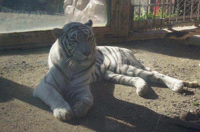 4. 不只是動物園!複合式娛樂設施「東武動物公園」