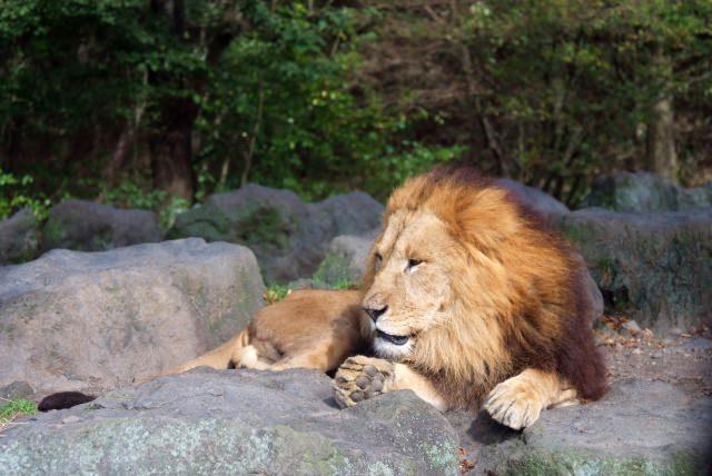 1. 日本最大的野生動物公園「富士野生動物公園」