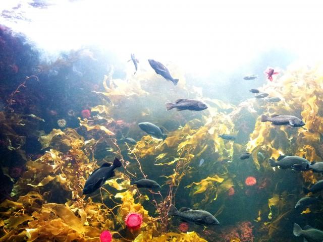 3. 在日本的中心與魚群相接處!「葛西臨海水族園」