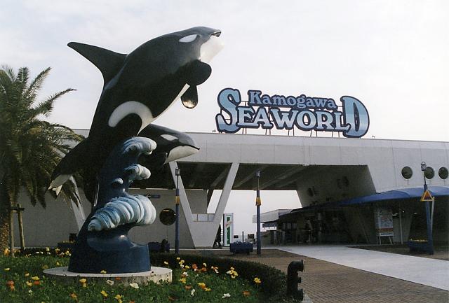 2. 千葉縣人氣超高的水族館「鴨川SEA WORLD」