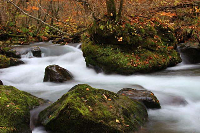 1. 多彩樹叢所圍繞的東北溪流之美「奧入瀨溪流」