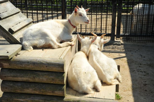 6. 不只是看還可以學的動物園!來日本旅遊的時候一定要來!「福岡市動植物園」