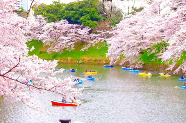 7. 東京都內的都會綠洲!櫻花也非常美「千鳥淵綠道」