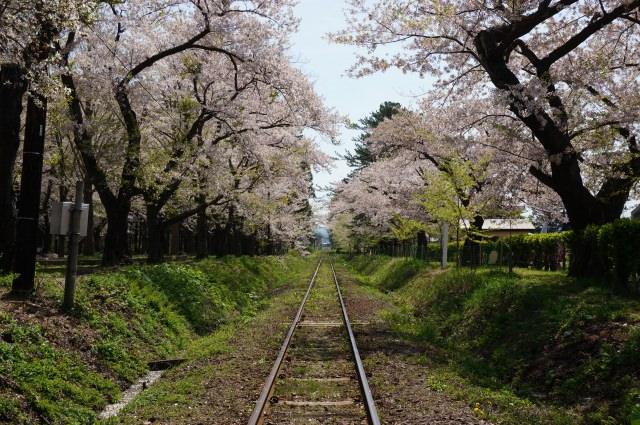 2. 可以看到在櫻花隧道下奔馳的津輕鐵道「芦野公園」