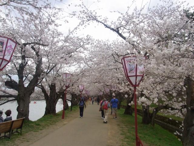 4. 城堡作為背景,享受日本的風景!賞櫻名勝!「弘前公園」