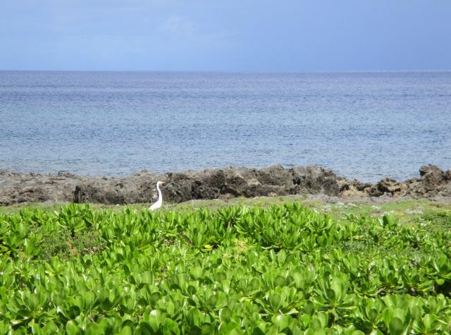 9. 久米島的神秘觀光景點!「Mifuga Rock」