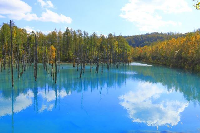 1. 神秘紅葉美景的北海道人氣景點「青池」