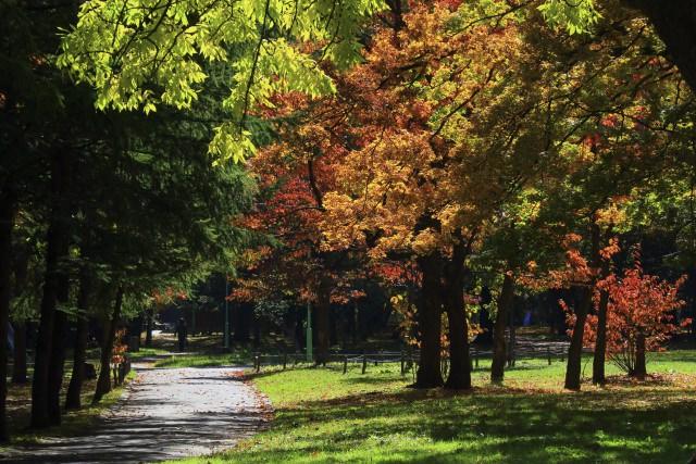 3. 札幌市民的休憩地!美麗的紅葉景色療癒身心「円山公園」
