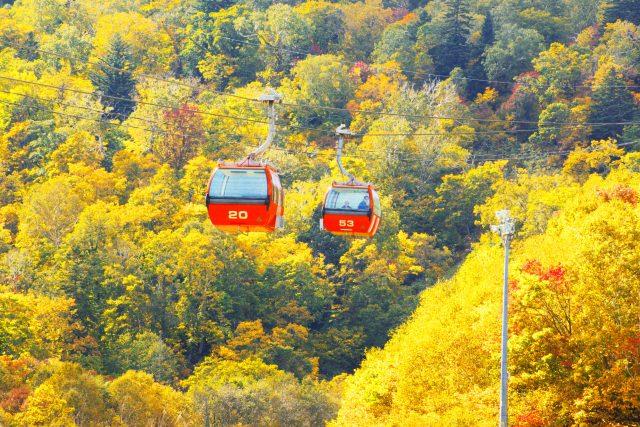 2. 搭乘搖搖晃晃的纜車享受眼下的紅葉美景「札幌國際滑雪場」