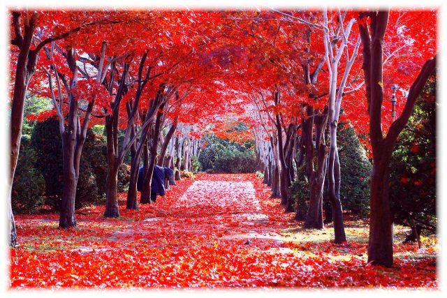 4. 札幌的人氣賞楓景點!「平岡樹藝中心」